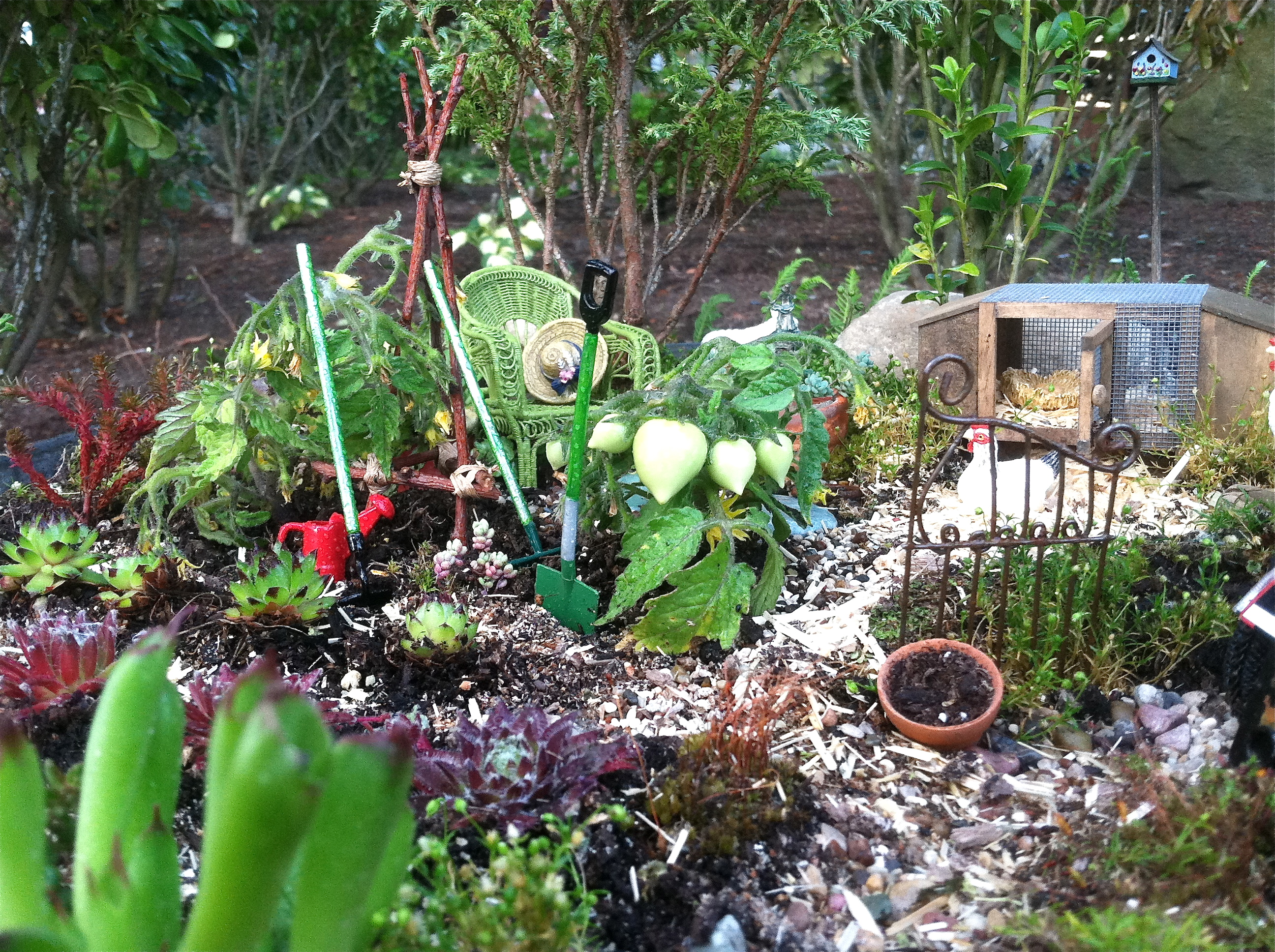 Miniature Farm Garden with real miniature tomatoes called 'Tom Thumb'