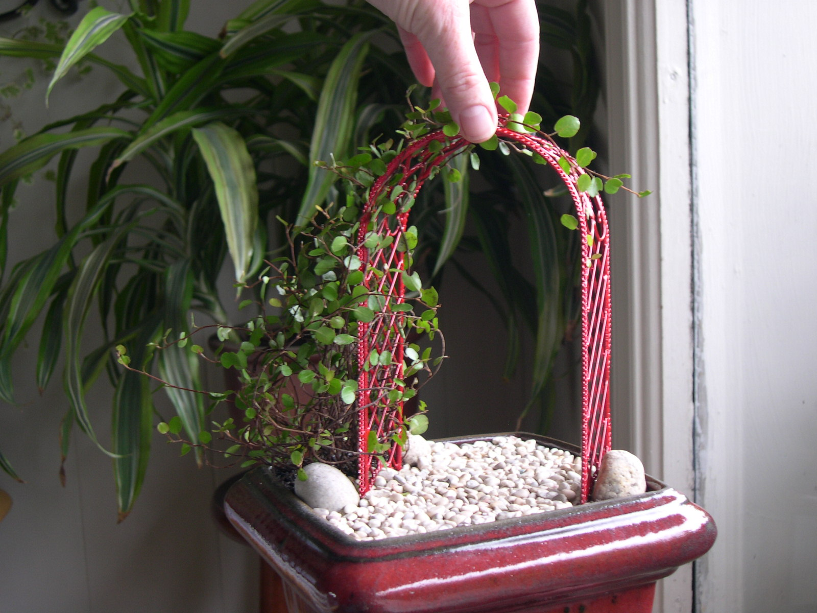 Miniature Garden Vine and Trellis