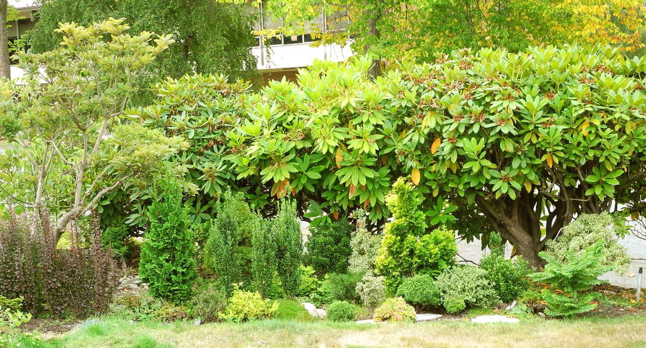 An in ground Miniature Garden
