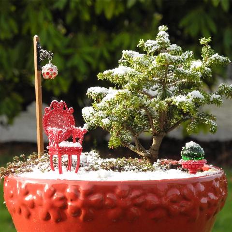 Snow in the Miniature Garden