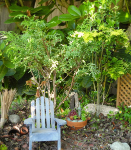 Miniature Garden Trees