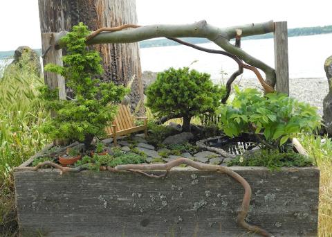 Miniature Garden in a trug