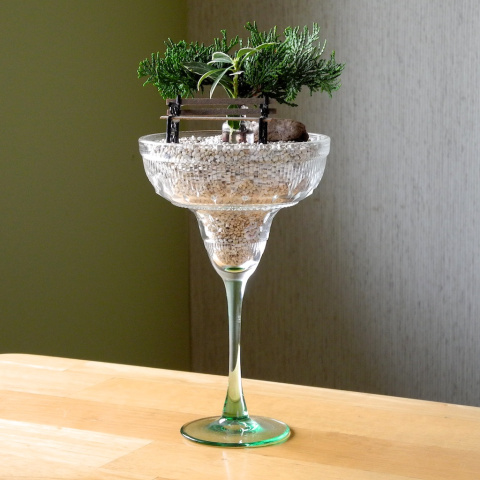 Different Ways to Grow Indoor Miniature Gardens