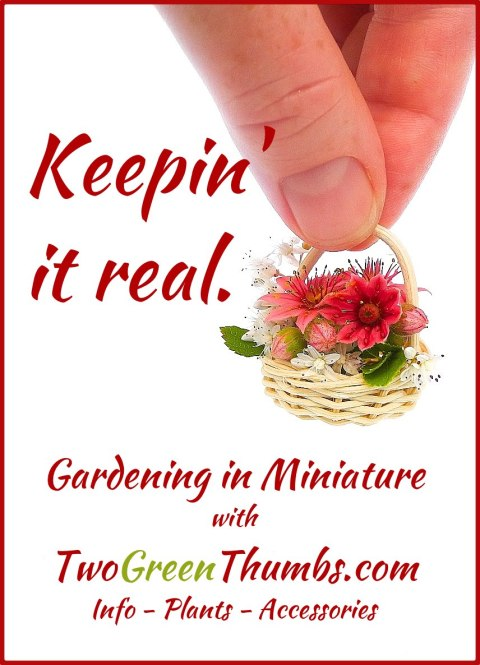 Keepin' it real in the miniature garden with TwoGreenThumbs.com