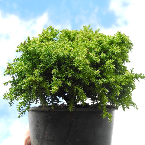 Miniature Plants from Two Green Thumbs.com
