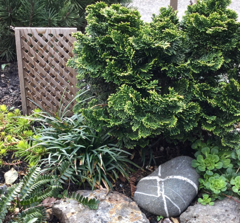 Plants-Spring-2016 - 2 (2)