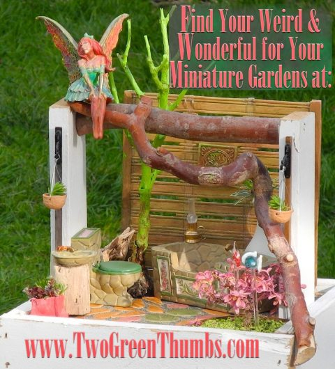 April Fools Day in the Miniature Garden