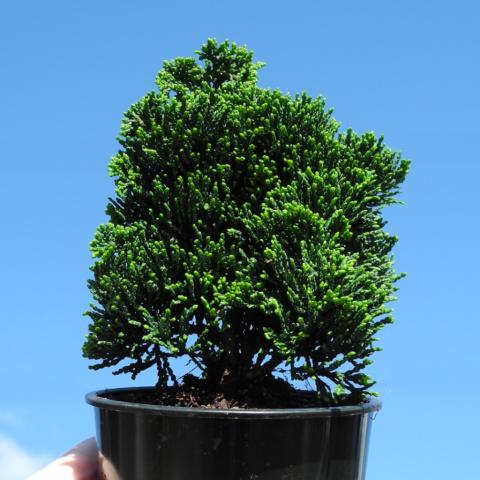 MORE Effortless Growing With Proven Miniature Garden Plants & TwoGreenThumbs.com