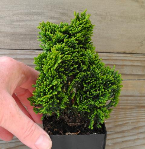 MORE Effortless Growing With Proven Miniature Garden Plants & TwoGreenThumbs.com.