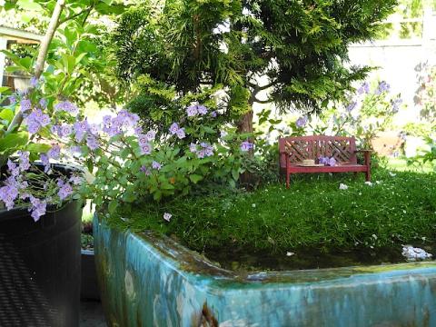 NWFGS miniature garden container