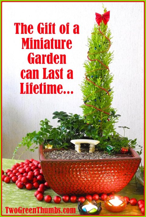 Give the gift that can last a lifetime: the joy of miniature gardening!
