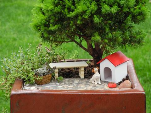 Custom Miniature Garden Kit