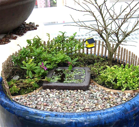 Miniature Gardening in Large Containers