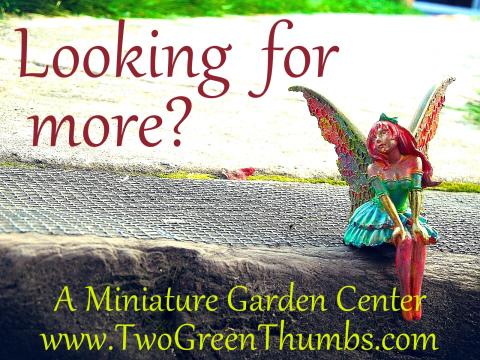 More than Fairy Gardening