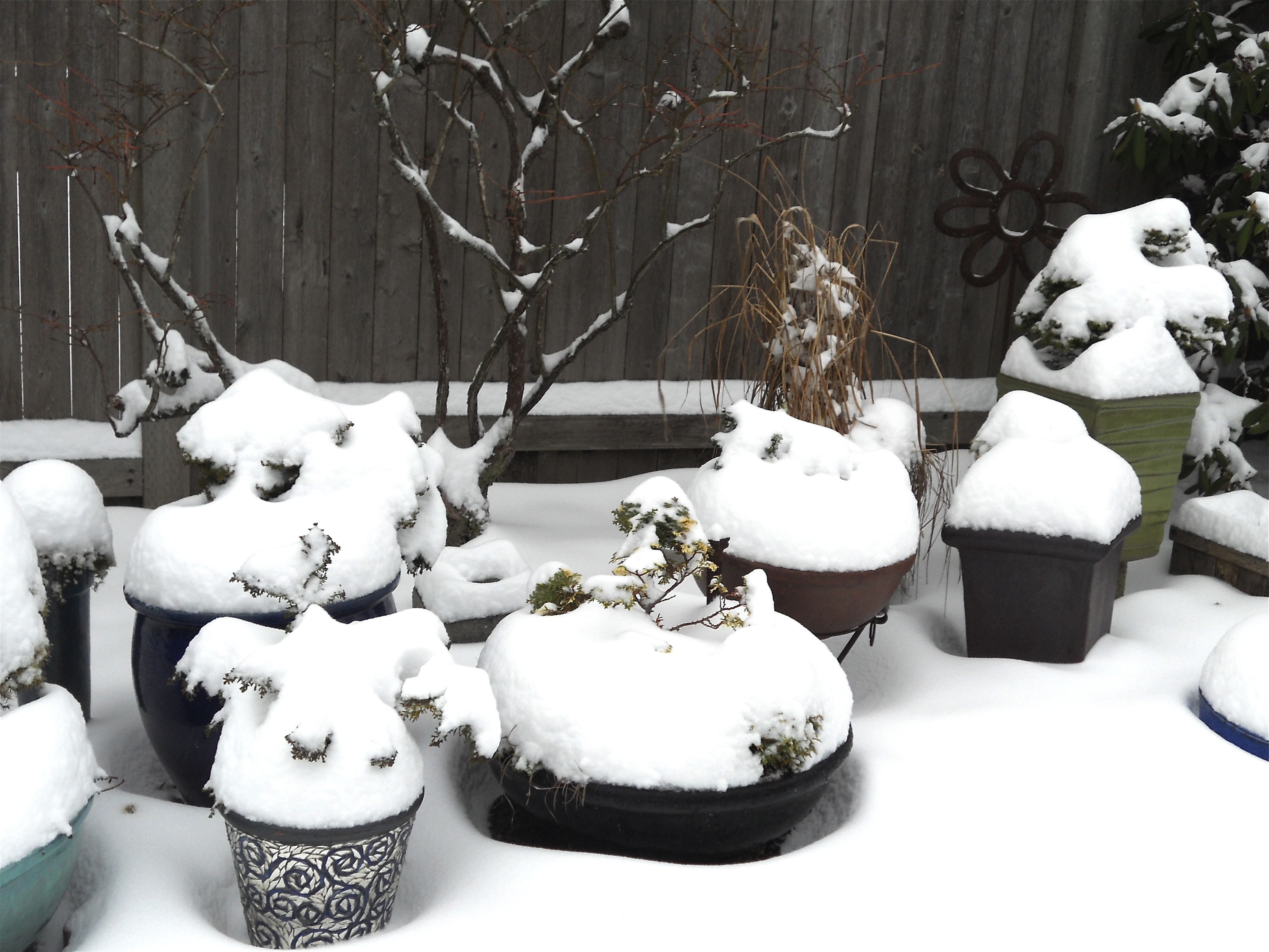 Miniature Gardens frozen in time
