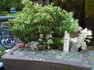 Miniature Gardening in Texas