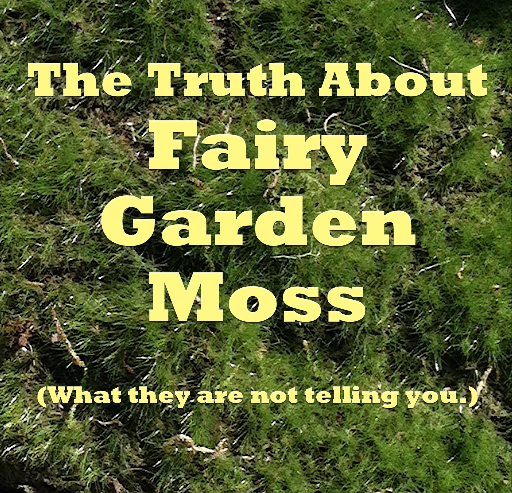 TruthAboutMoss 1