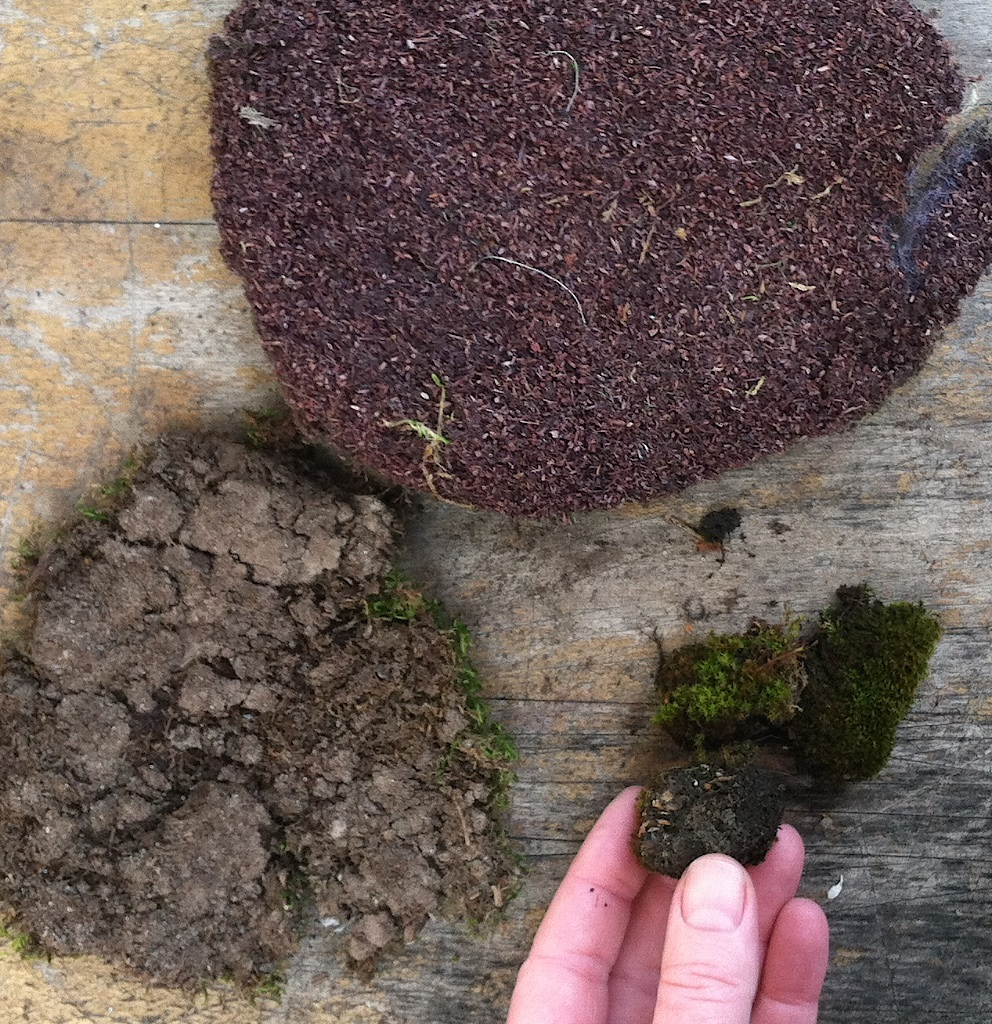 The Truth About Fairy Moss