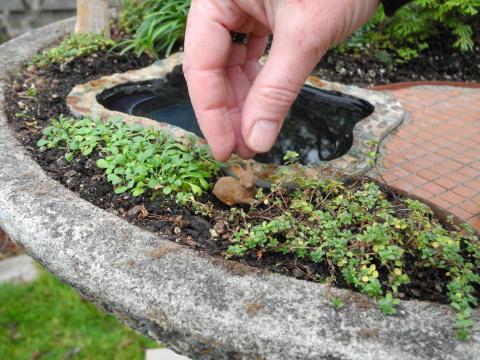 Miniature Garden Landscape Tip