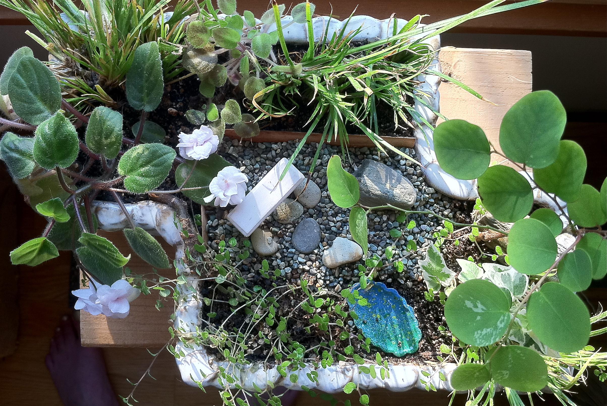 Miniature Dish Gardening is fun and rewarding.