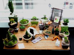 Miniature Garden Display