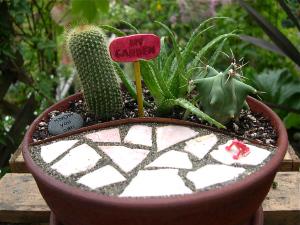 A Miniature Cactus Garden