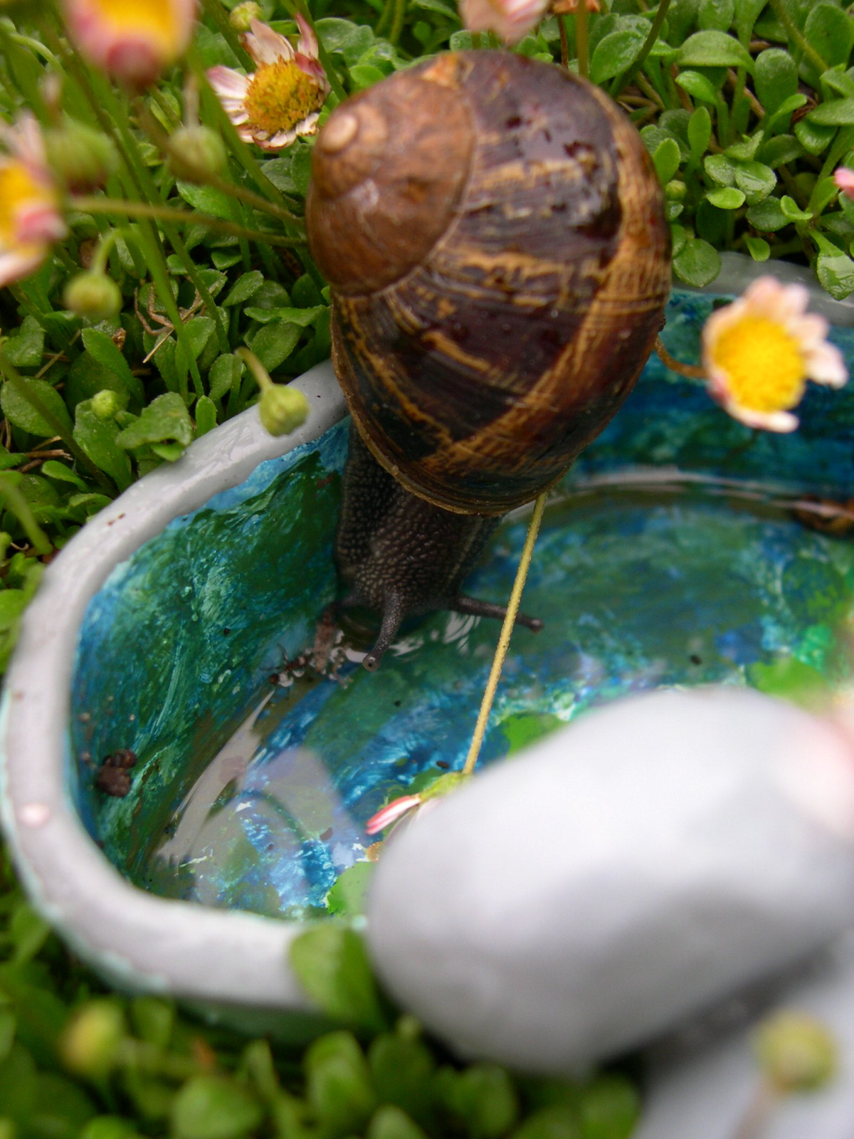 Snail at the Miniature Garden watering hole.